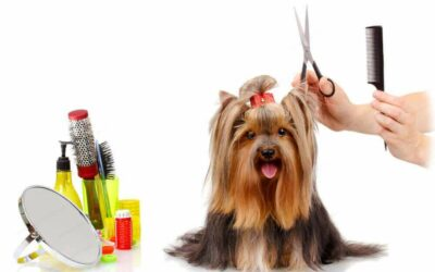 Groom Your Dog At Home And Save On Professional Dog Grooming Services